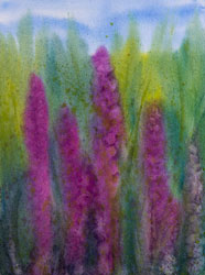 Watercolor painting Purple Loosestrife