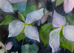 Watercolor painting White Trilliums in the spring