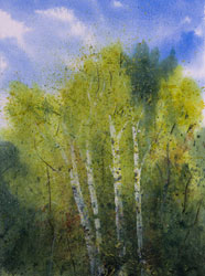 Watercolor painting White Birch Trees Summer